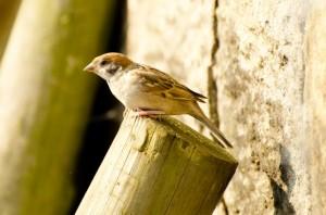 bird-1373014185OaK
